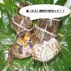 【本場中国産】上海蟹 メス 母 最大! 最上級5匹セット @190g前後 贈答 ギフトにオススメ 蟹 オーダー頂いてから急速冷凍