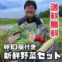 【送料無料】新鮮野菜セット 9月限定カステラとたまごのおまけ