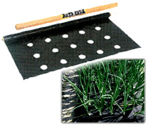 玉ねぎ用穴あきマルチ 5条植え(95cm巾×50m)【10月以降の発送となります】