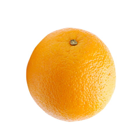 柑橘類の苗 【 ネーブルオレンジ 1年生苗木 】 [ 雑柑 オレンジ かんきつ カンキツ 柑橘 苗 ]