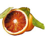 ブラッド オレンジ かんきつ
