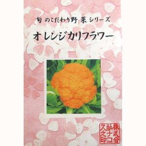 カリフラワー オレンジ