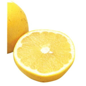 独特の苦味のある酸っぱさが大人気!柑橘類の苗 【 グレープフルーツ 1年生苗木 】 [ 香酸柑橘 ...