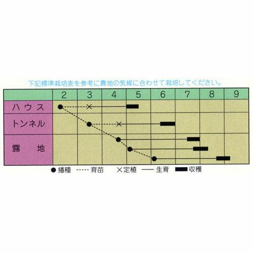 枝豆 種 【 たんくろう 】 種子 小袋(約20ml) ( 種 野菜 野菜種子 野菜種 )
