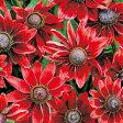 ルドベキア 種 【 チェリーブランディー 】 小袋 ( ルドベキアの種 花の種 )
