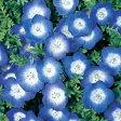 ネモフィラ 種 【 インシグニス ブルー 】 実咲小袋 ( ネモフィラの種 花の種 )