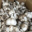 にんにく ホワイト六片 種球 ニンニク種 約400g(20〜30個) 【国産】 [ 葫 球根 種 ]