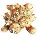 里芋(さといも) 【八ツ頭】 種芋 1kg(1個入り)[ サ...