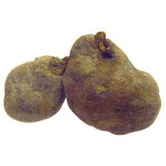 山芋(やまいも) 【 丹波山の芋 】 種芋 500g入り [ ヤマイモ トロロ とろろ芋 栽培…
