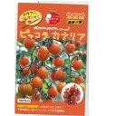 ミニトマト 種 【ピッコラカナリア】 1000粒 ( 種 野菜 野菜種子 野菜種 )