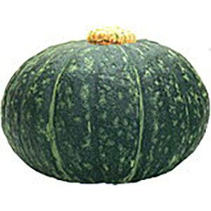かぼちゃ苗 【 栗カボチャ 】 苗 4本 セット 【予約販売】<br> [ 南瓜 カボチャ 野菜 苗 通販 野菜苗 販売 ]
