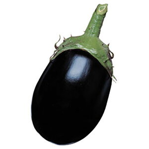 ナス苗 【 黒わし 】 苗 4本 【予約販売】<br> [ 茄子 なす 家庭菜園 野菜 苗 通販 野菜苗 販売 ]