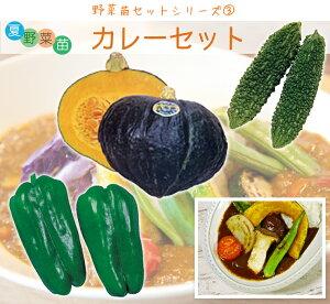 夏野菜苗 カレーセット(カボチャ苗 ピーマン苗 ゴーヤ苗各4本 、計12本)