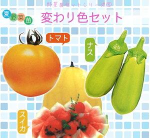 夏野菜苗 変わり色セット(トマト苗、ナス苗 スイカ苗各4本 、計12本)