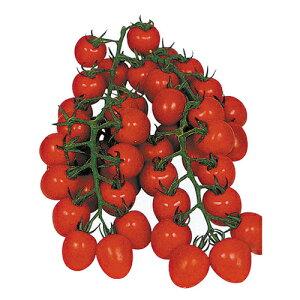 トマト苗 【 甘っこ 】 苗 4本 【予約販売】<br> [ 家庭菜園 野菜 苗 通販 野菜苗 販売 ]