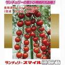 ミニトマト 種 【サンチェリースマイル】 100粒( 種 野菜 野菜種子 野菜種 ) ★