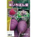 大根 種 【味いちばん紫】 50粒 ( 種 野菜 野菜種子 野菜種 )