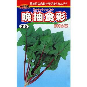 ホウレンソウ 種 【 晩抽食彩X(赤軸) 】 種子 3万粒 ( 種 野菜 野菜種子 野菜種 )