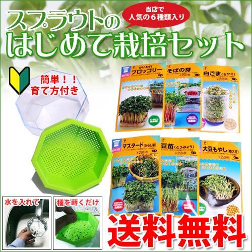 スプラウト 栽培セット 自由研究に最適 【 はじめて栽培セット (栽培容器付き) 】