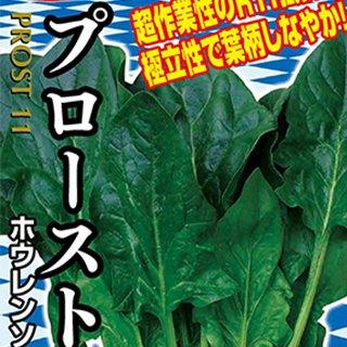 ホウレンソウ 種 【 プロースト11 】 1dl ( ホウレンソウの種 )