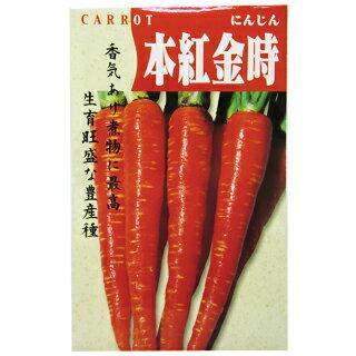 にんじん 種 【本紅金時人参】 8ml ( 種 野菜 野菜種子 野菜種 )
