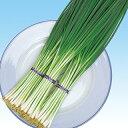 ネギ 種 【 ネギ鴨頭 】 種子 1L ( 種 野菜 野菜種子 野菜種 )