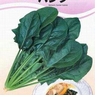 ホウレンソウ 種 【 ハンター 】 種子 プライミング種子M3万粒 ( 種 野菜 野菜種子 野菜種 )
