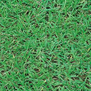 芝生の種|種 通販・価格比較 - 価格.com