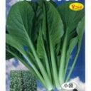 小松菜 種 【 夏の甲子園 】 2dl ( 小松菜の種 )