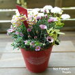 送料無料母の日ギフトかわいい赤いブリキ鉢の寄せ植え
