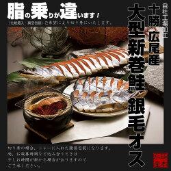 【送料無料】北海道広尾産大型新巻鮭銀毛オス1本物(化粧箱入・真空包装)3.3kg前後
