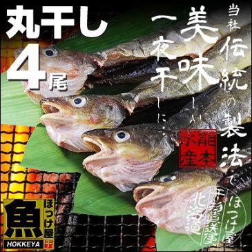 北海道産 丸干しこまい 一夜干し 1串(3尾〜5尾)