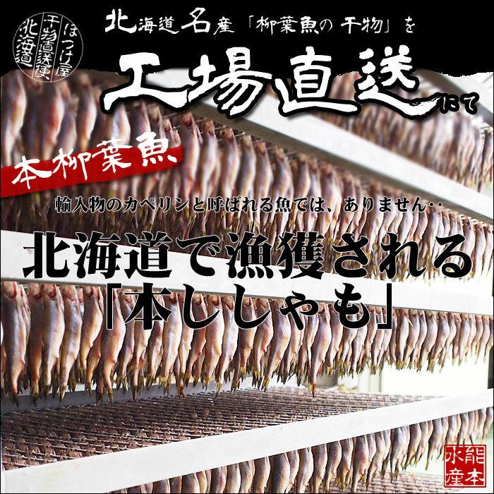 北海道(広尾産)ししゃもメス 超特大サイズ 10尾 【本ししゃも】