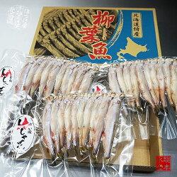 【送料無料】「新物」北海道(広尾産)ししゃもオスメス込み30尾(10尾×3)(化粧箱入)【本ししゃも】