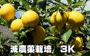 リスボンレモン 減農薬栽培 3kg 果物・野菜ソムリエ が作る!激オシ【送料無料】海水散布!ミネラルたっぷり! 美味しいレモン  九州熊本県れもん 熊本檸檬 すっぱい香りがいい!