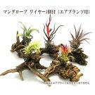 マングローブ置型ワイヤー1個付(エアプランツ用)【植物は商品に含まれておりません】