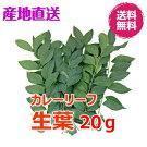 【希少】【生産者直送】カレーリーフの葉【生葉】20g【他商品との同送不可】