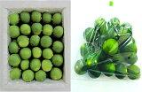 徳島産すだち 酢橘 1kg/箱 【送料無料、消費税込み】 Lから2Lサイズ 地元 徳島より新鮮な酢橘をお届けします。