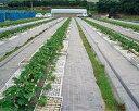 防草ルンルンシート 白×黒 幅100cm×長さ100m(防草