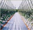 アグリシート シルバーグレー 長さ100m×幅50cm 遮光性が高く、防草効果抜群の防草シートです。(雑草防止シート 雑草シート 庭 雑草対策 農業資材 草防止シート 農業用品 農業用 道具 ガーデニング 園芸資材 透水性 保温 ぬかるみ防止 ハウス ビニールハウス 家庭菜園)