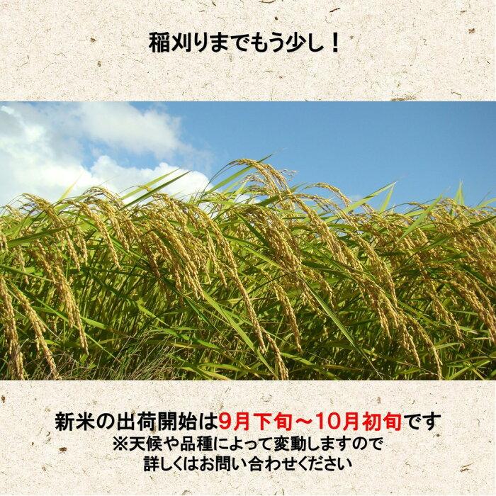 29年産白米5kgコシヒカリ「ダイヤモンド褒賞受賞米」野沢温泉村産