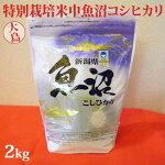 令和元年産新米☆特別栽培米中魚沼産コシヒカリ2kg(大島さん)