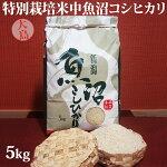 令和元年産新米☆特別栽培米中魚沼産コシヒカリ5kg(大島さん)
