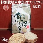 令和元年産新米☆特別栽培米中魚沼産コシヒカリ5kg(大島さん)[玄米]