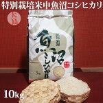 令和元年産新米☆特別栽培米中魚沼産コシヒカリ10kg(5kg×2袋)(大島さん)