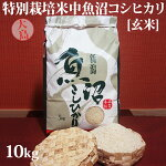 令和元年産新米☆特別栽培米中魚沼産コシヒカリ10kg(5kg×2袋)(大島さん)[玄米]