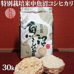 令和元年産新米☆特別栽培米中魚沼産コシヒカリ30kg(大島さん)