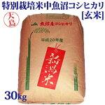令和元年産新米☆特別栽培米中魚沼産コシヒカリ30kg(大島さん)[玄米]