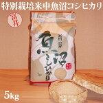 令和元年産新米☆特別栽培米中魚沼産コシヒカリ5kg(富井さん)