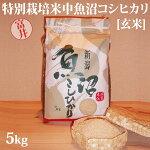 令和元年産新米☆特別栽培米中魚沼産コシヒカリ5kg(富井さん)[玄米]